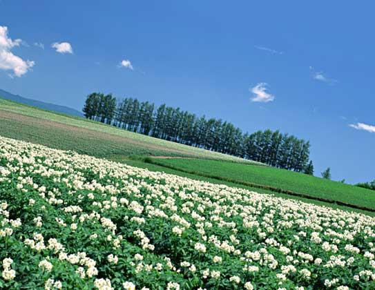 畑 農場 農業体験